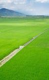 Grünen Sie Bauernhof mit blauem Himmel und weißen Wolken Lizenzfreie Stockbilder