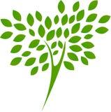 Grünen Sie Baum mit Blättern Stockfotografie