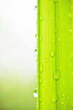Grünen Sie Blätter und Wassertropfen Stockfotos