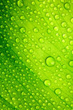Grünen Sie Blatt Stockfoto