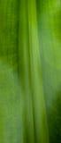 Grünen Sie Blatt-Beschaffenheit Stockbilder
