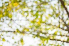 Grünen Sie bokeh abstrakten hellen Hintergrund Stockbilder