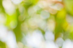 Grünen Sie bokeh abstrakten hellen Hintergrund Lizenzfreie Stockbilder