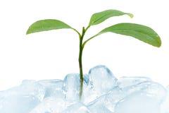 Grünen Sie das Blatt, das Eis bricht lizenzfreie stockfotografie