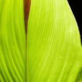 Grünen Sie die getrennten Blätter Lizenzfreie Stockfotografie