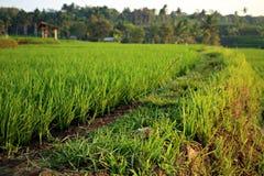 Grünen Sie Feld in der Landschaft Stockbilder