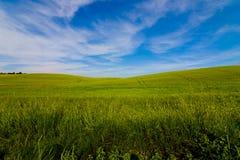 Grünen Sie Feld mit blauem Himmel Lizenzfreies Stockfoto