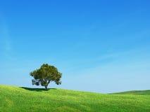 Grünen Sie Feld und Baum Stockfotografie