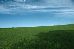 Grünen Sie Feld und blauen Himmel Lizenzfreie Stockfotos