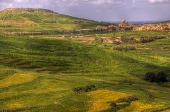 Grünen Sie Felder in Malta Lizenzfreies Stockfoto