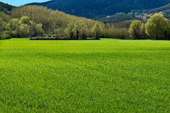 Grünen Sie Frühlingsausbruch Lizenzfreie Stockbilder