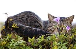 Grünen Sie gemusterte Katze Lizenzfreie Stockfotografie
