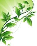 Grünen Sie Hintergrund vektor abbildung