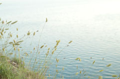 Grünen Sie Kegel auf einem blauen Meerbackgroud Lizenzfreies Stockbild