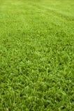 Grünen Sie Rasen Stockfotografie