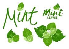 Grünen Sie tadellose Blätter lizenzfreie abbildung