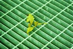 Grünen Sie ultra farbige quadratische Metallluke in der städtischen Pflasterung, im Abwasserkanalkanaldeckel mit Markierungslinie Lizenzfreie Stockfotos