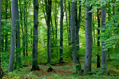 Grünen Sie Wald Stockfoto