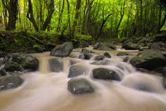 Grünen Sie Wald durch einen Fluss Lizenzfreie Stockbilder