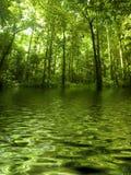 Grünen Sie Wald durch Fluss Stockfotografie