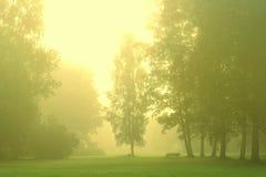 Grünen Sie Wald mit Morgennebel lizenzfreie stockfotografie