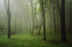 Grünen Sie Wald mit Nebel nach Regen Stockbilder