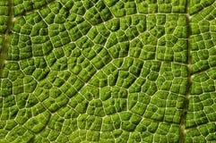 Grünen Sie Welt Stockbilder
