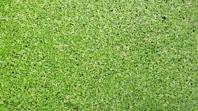 Grüner Ökologieauszug Lizenzfreies Stockbild