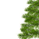 Grüner üppiger Fichtenzweig Tannenzweige auf weißer Illustration Stockbilder