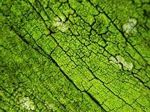 Grüner abstrakter Hintergrund, natürliche Baumrindebeschaffenheit Stockfotografie