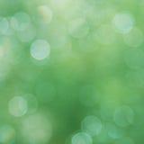 Grüner abstrakter Hintergrund Sommerlicht Stockfotografie