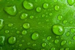 Grüner abstrakter Hintergrund. Tropfen des Taus auf einem Blatt Stockfoto