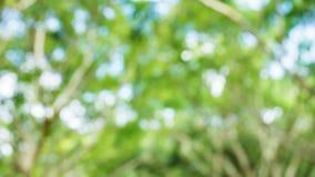 Grüner abstrakter Wald Lizenzfreies Stockbild