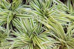 Grüner ADN-Weißbaum Lizenzfreie Stockbilder