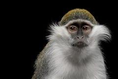Grüner Affe auf schwarzem Hintergrund Lizenzfreie Stockfotos