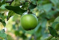 Grüner Apfel Lizenzfreie Stockbilder