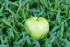 Grüner Apfel, der auf frischem Gras liegt Stockbilder