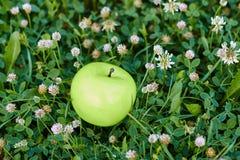 Grüner Apfel, der auf frischem Gras liegt Stockbild