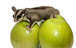 Grüner Apfel drei auf ihnen ssidit diabetespossum Lizenzfreie Stockbilder