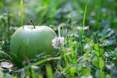 Grüner Apfel im Gras Lizenzfreies Stockbild