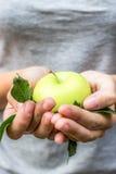 Grüner Apfel mit Blättern in ihren Händen Lizenzfreies Stockfoto