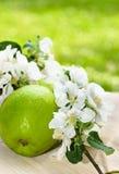 Grüner Apfel mit einer Niederlassung einer blühenden Applebaumnahaufnahme Stockbild