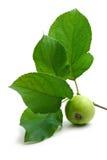 Grüner Apfel und Blatt Stockbild