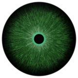 Grüner Augapfel der Katze mit heller runder, schwarzer Pupille und lokalisiertem weißem Hintergrund lizenzfreie abbildung