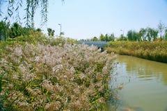 Grüner Ausstellungs-Garten in Zhengzhou Stockfotos