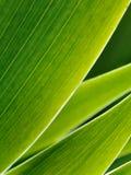 Grüner Auszug Lizenzfreie Stockfotografie