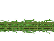 Grüner Bambus Stockfotografie