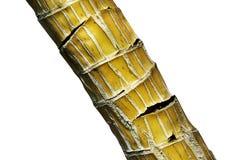 Grüner Bambus stockfoto