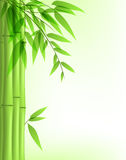 Grüner Bambus Lizenzfreie Stockfotografie
