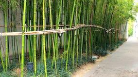 Grüner Bambus Lizenzfreie Stockbilder